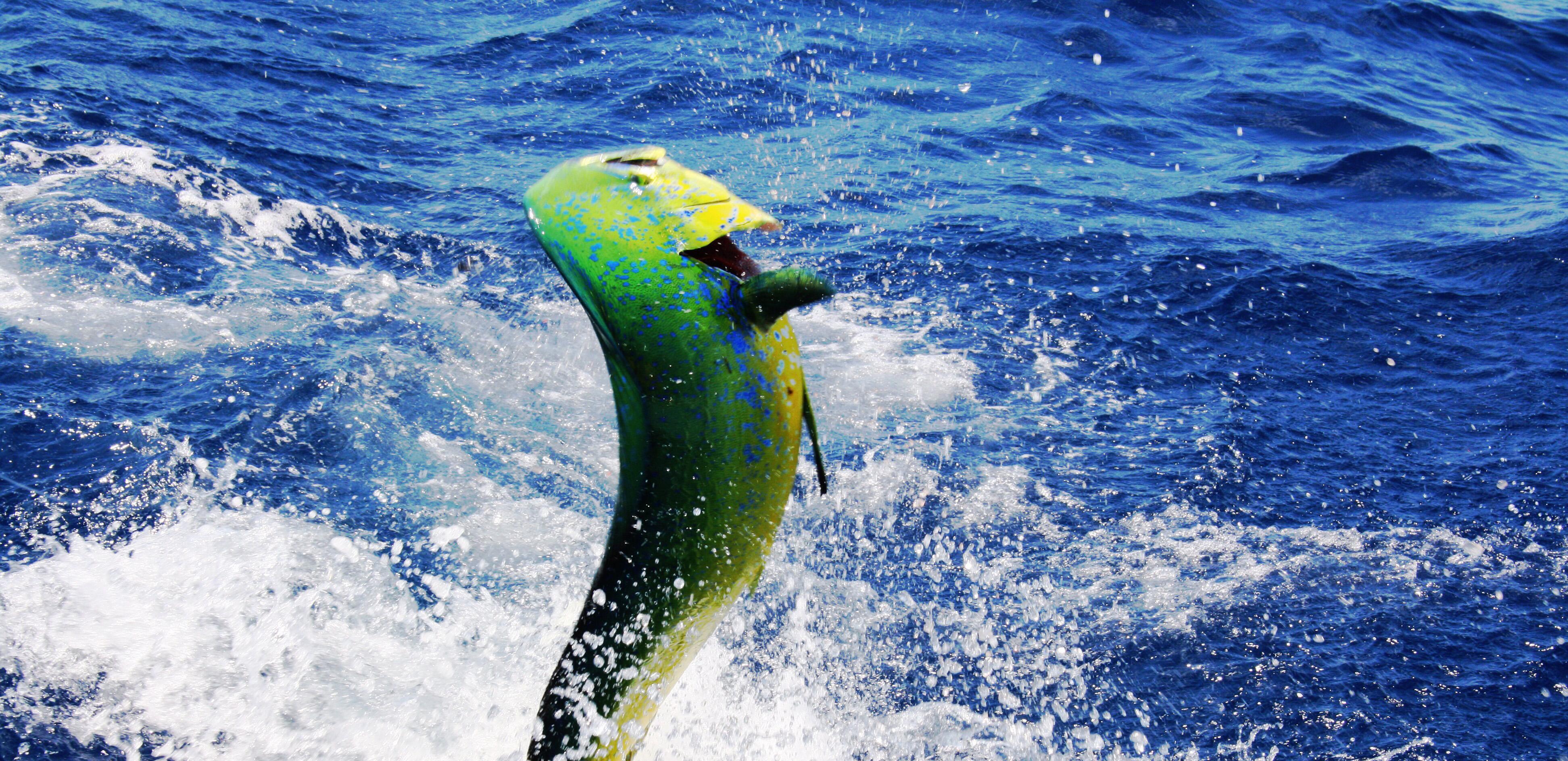 Hatteras Fishing Report | Hatteras Landing
