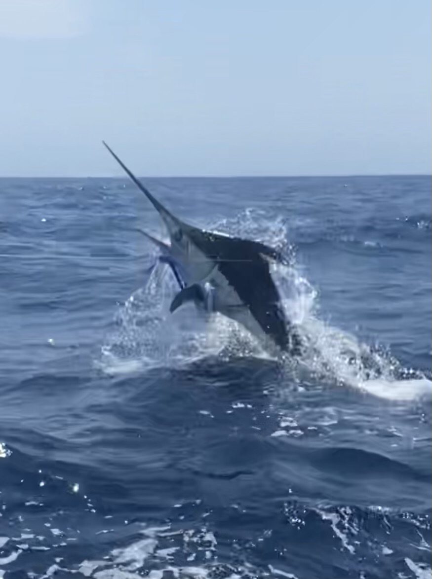 Longer Days Fishing Charters Teach's Lair Blue Marlin