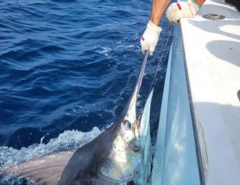 Carolina Girl Teach's Lair Hatteras Fishing Blue Marlin