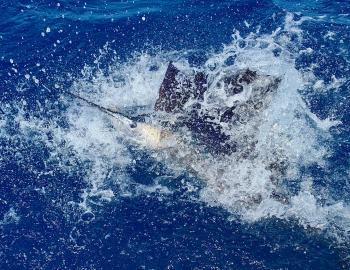Hatteras Sportfishing Sailfish Citation Teach's Lair Harper's Folly