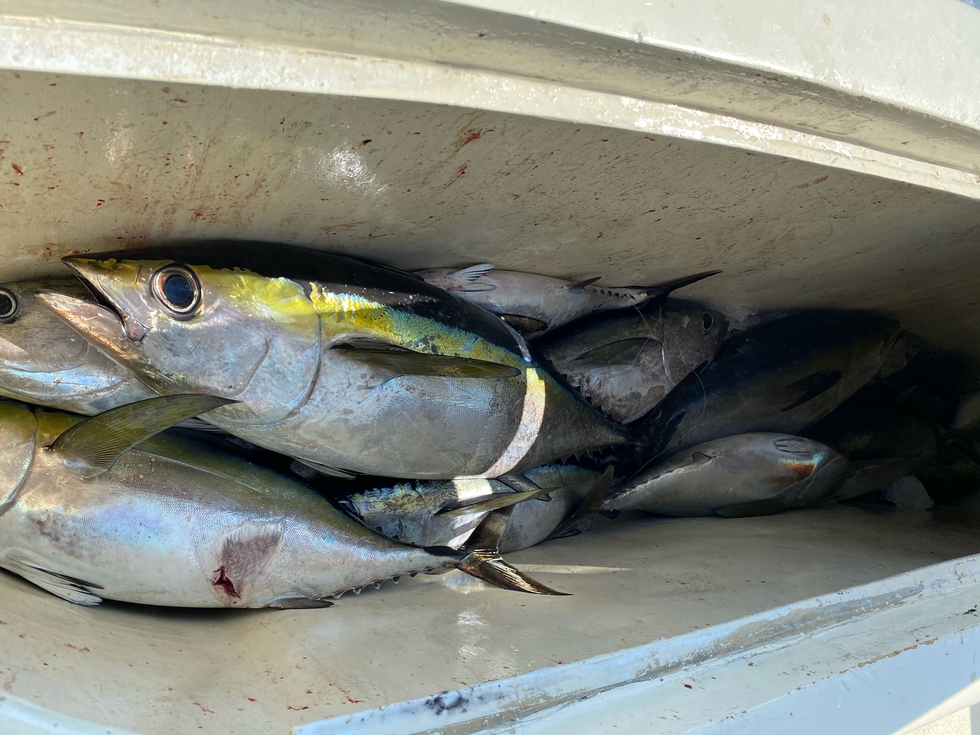 Blackfin Offshore Fishing Harper's Folly Teach's Lair Hatteras OBX