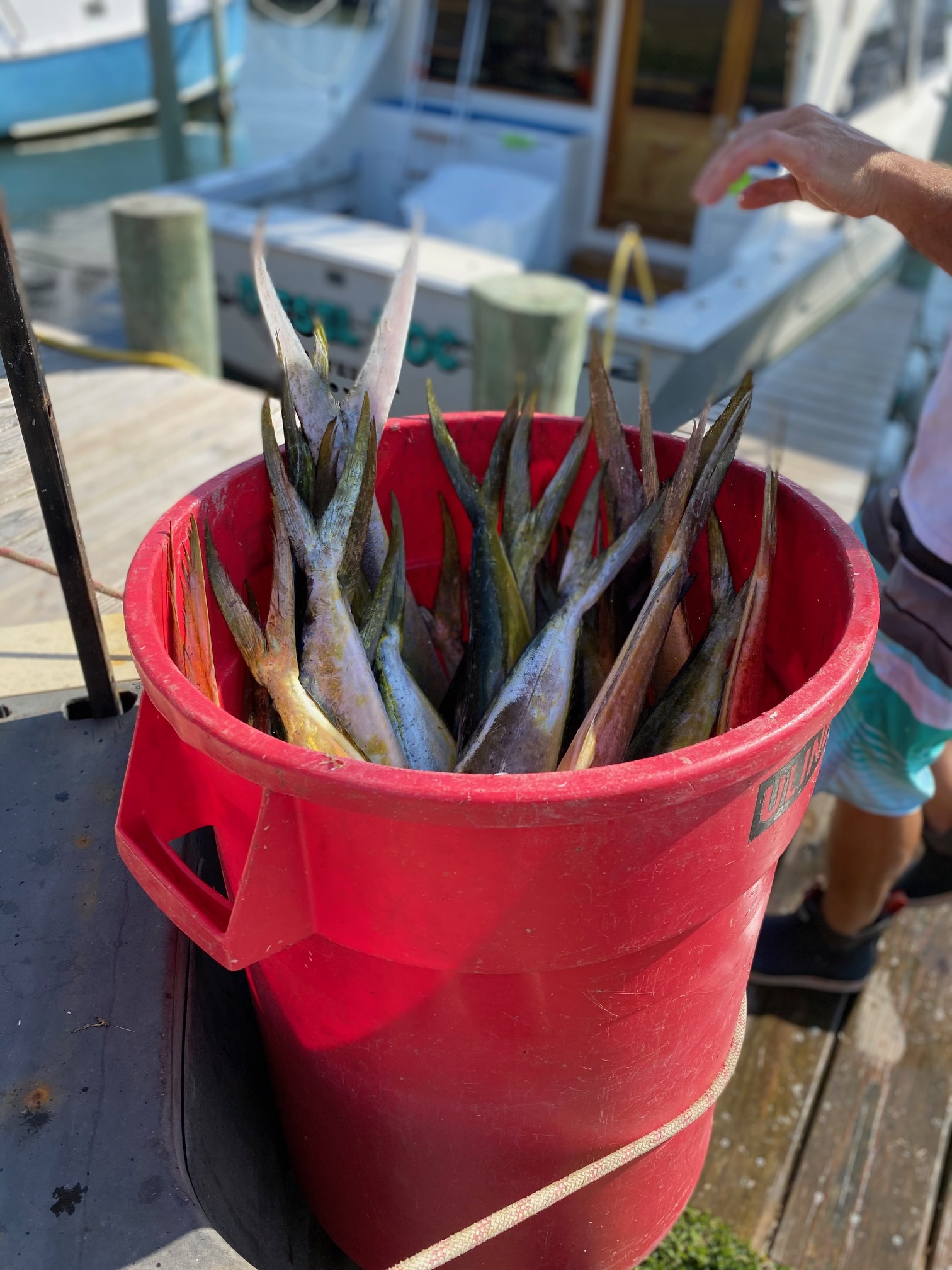 Dolphin Mahi Mahi Fishing Charters Teach's Lair Marina Hatteras, NC