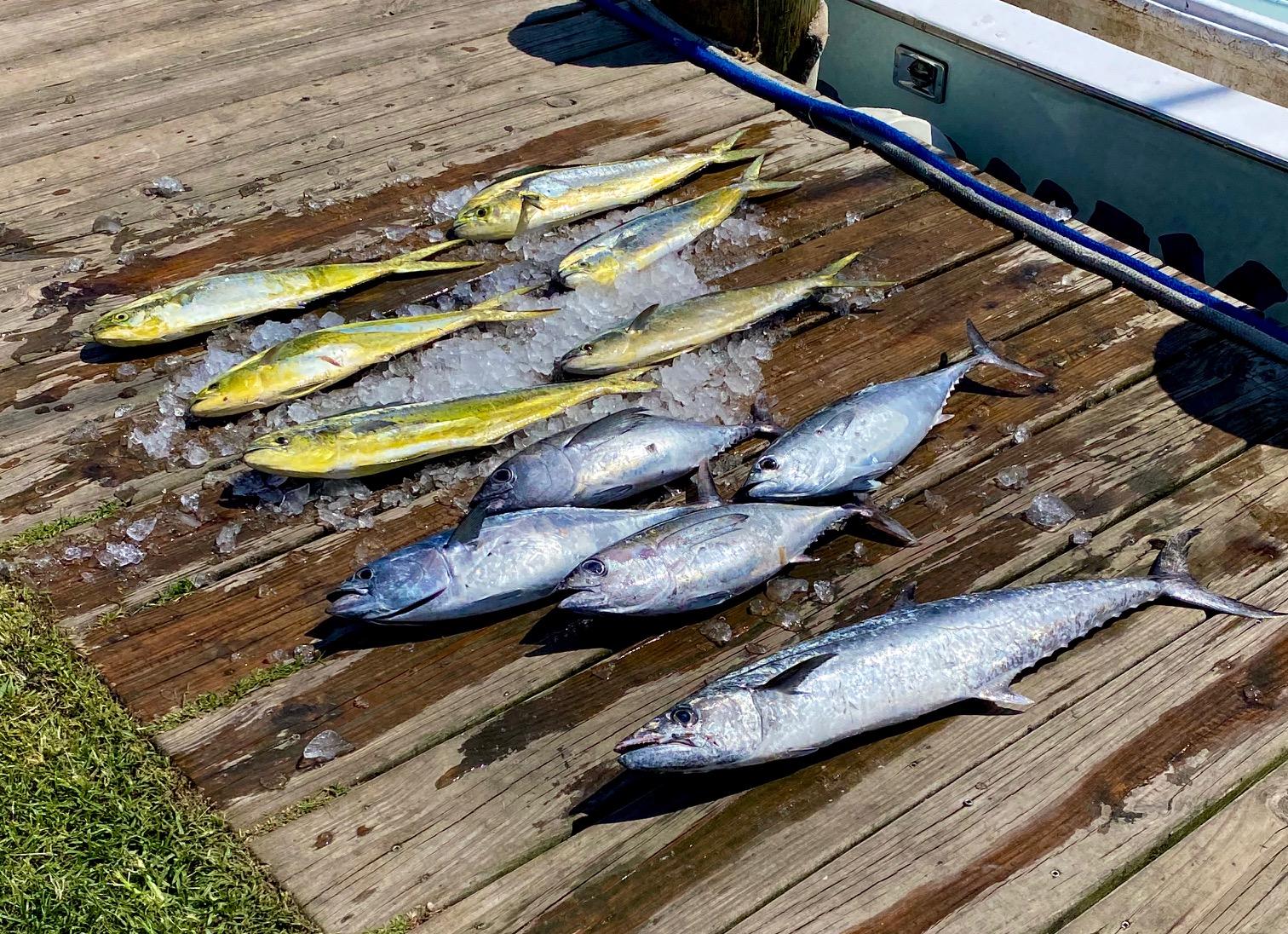 Fishing Report Hatteras