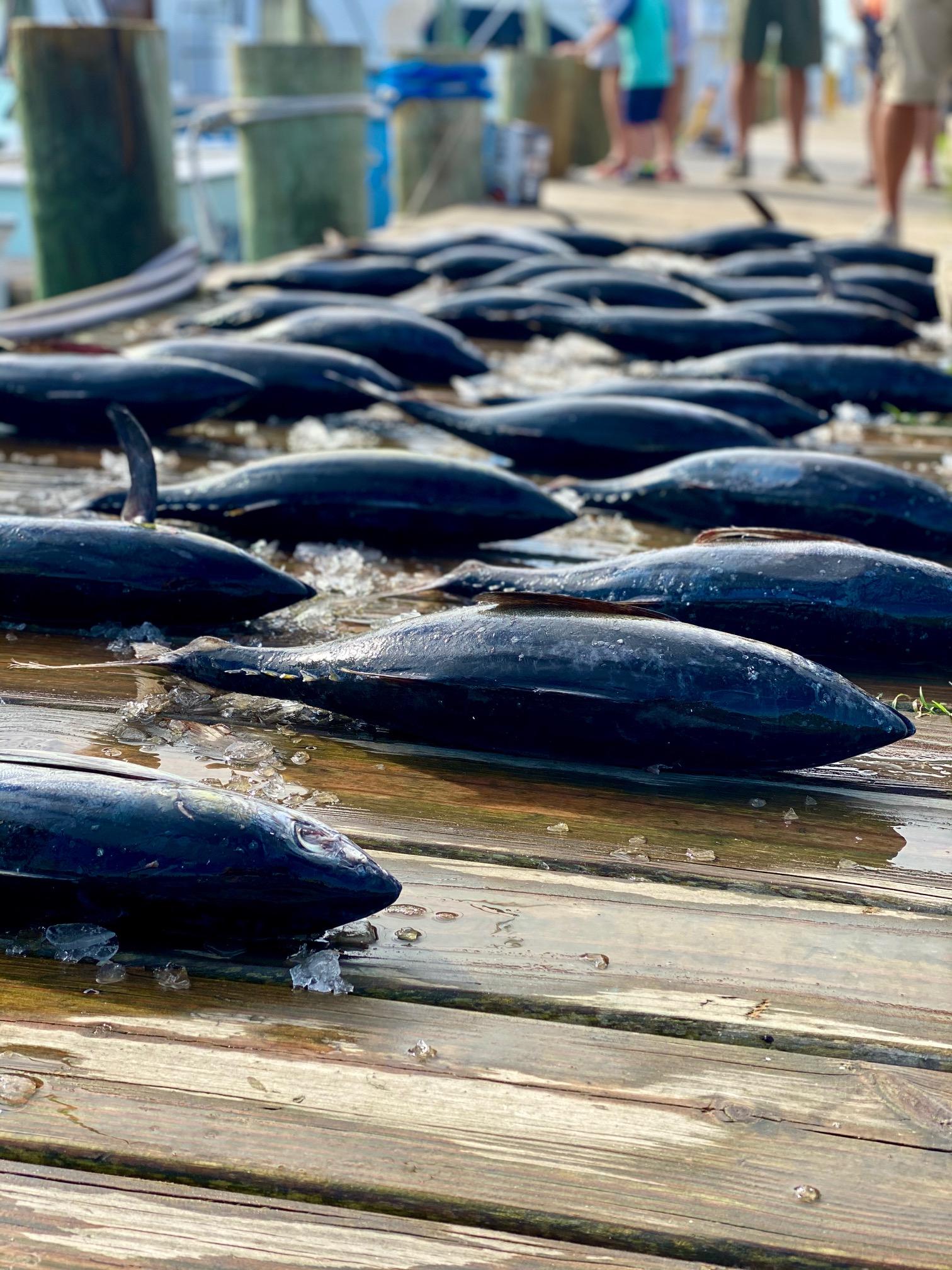 Hatteras Sportfishing Tuna Offshore Gulfstream Teach's Lair